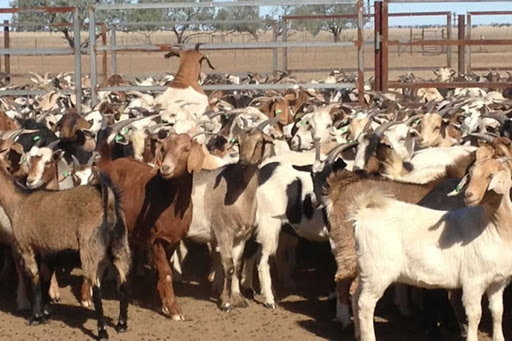 AKSG announces immediate re-opening of livestock markets